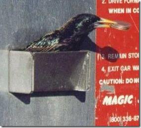 Bird save money